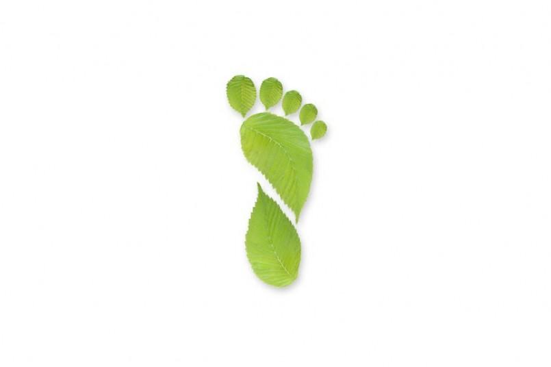 Caminatas ecológicas, por un mundo más consciente