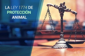 ley-proteccion-animal